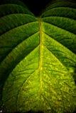 макрос листьев Стоковая Фотография