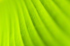 макрос листьев Стоковое Изображение RF