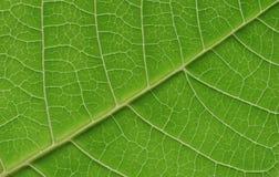 макрос листьев Стоковое фото RF