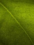 макрос листьев Стоковые Фото