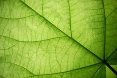 макрос листьев Стоковое Изображение