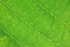 макрос листьев Стоковые Изображения