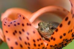макрос лягушки глаза стоковое изображение