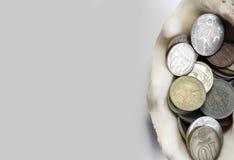 Макрос монетки раковины стоковое изображение rf