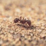 Макрос муравья стоковые фотографии rf