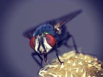 Макрос мухы комнатной Стоковые Фото
