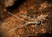 макрос мухы может Стоковые Изображения RF