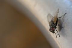 Макрос мухы пока ел Стоковое фото RF