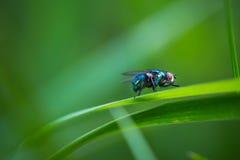 Макрос мухы сидя на заводе Стоковые Фото