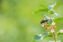 Макрос мухы сидя на заводе Стоковая Фотография