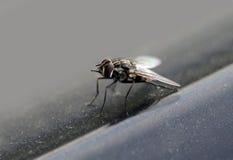 макрос мухы стоковая фотография