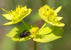 Макрос мухы Стоковые Фото