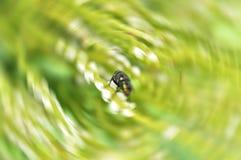 макрос мухы Стоковые Изображения