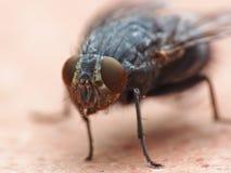 макрос мухы Стоковое фото RF
