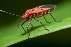 макрос насекомого Стоковые Изображения RF