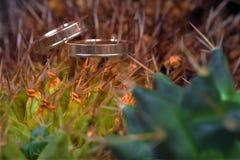 Макрос обручальных колец затем на нерезкости завода кактуса Стоковое фото RF