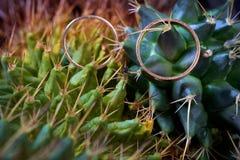 Макрос обручальных колец на заводе кактуса Стоковая Фотография