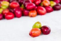 Макрос органического много кофейных зерен вишен цветов Стоковая Фотография