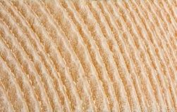 макрос отрезока ежегодника звенит древесина Стоковая Фотография RF