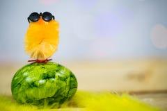 Макрос пасхальных яя, на желтых пер, цыпленок Стоковые Изображения RF