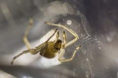 Макрос паука Стоковые Фотографии RF