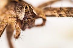 Макрос паука Стоковое фото RF