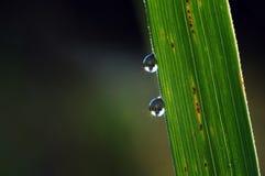 Макрос 2 падений воды Стоковые Изображения RF