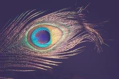 Макрос пера павлина ретро Стоковая Фотография