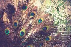 Макрос пера павлина ретро Стоковая Фотография RF