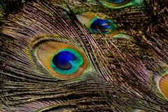 Макрос пера павлина Стоковое Изображение RF