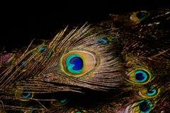 Макрос пера павлина Стоковые Изображения RF