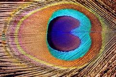 Макрос пера павлина Стоковое Изображение
