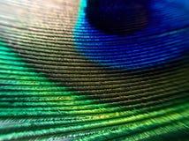 Макрос пера павлина Стоковое Фото