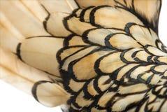 Макрос пера петуха bantam Sebright стоковое изображение rf