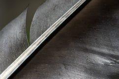 Макрос пера птицы Стоковые Фотографии RF