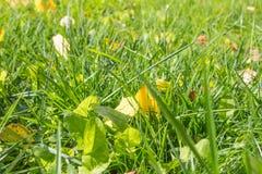 Макрос предпосылки солнца зеленой травы упаденный лист Стоковые Изображения
