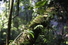 Макрос природы Стоковая Фотография