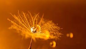 Макрос пушка в апельсине Стоковое Изображение RF