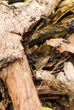 Макрос работая муравья Стоковые Изображения RF