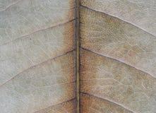 Макрос разваленных лист Стоковое фото RF
