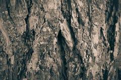 Макрос расшивы дерева в черно-белом создает конспект Стоковое Изображение