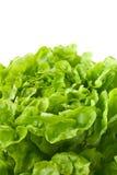 макрос салата butterhead близкий вверх стоковые фото