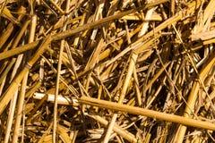 Макрос сена или соломы Стоковые Изображения