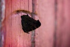 Макрос снял бабочки темного коричневого цвета сидя на деревянных дверях на предпосылке кирпича wal Стоковые Фото