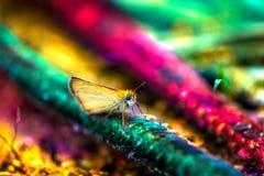 Макрос снял желтой бабочки при большие темные глаза сидя на строке в лесе Стоковые Изображения