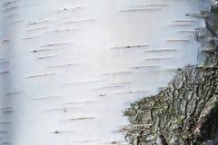 Макрос снял текстуры или предпосылки коры березы стоковое изображение