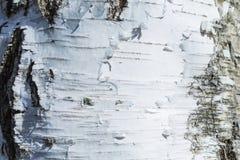 Макрос снял текстуры или предпосылки коры березы стоковая фотография rf