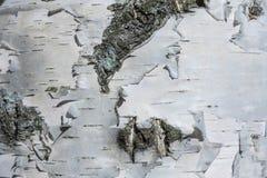 Макрос снял текстуры или предпосылки коры березы стоковые фотографии rf