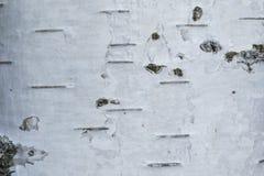 Макрос снял текстуры или предпосылки коры березы стоковая фотография
