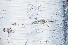 Макрос снял текстуры или предпосылки коры березы стоковое фото